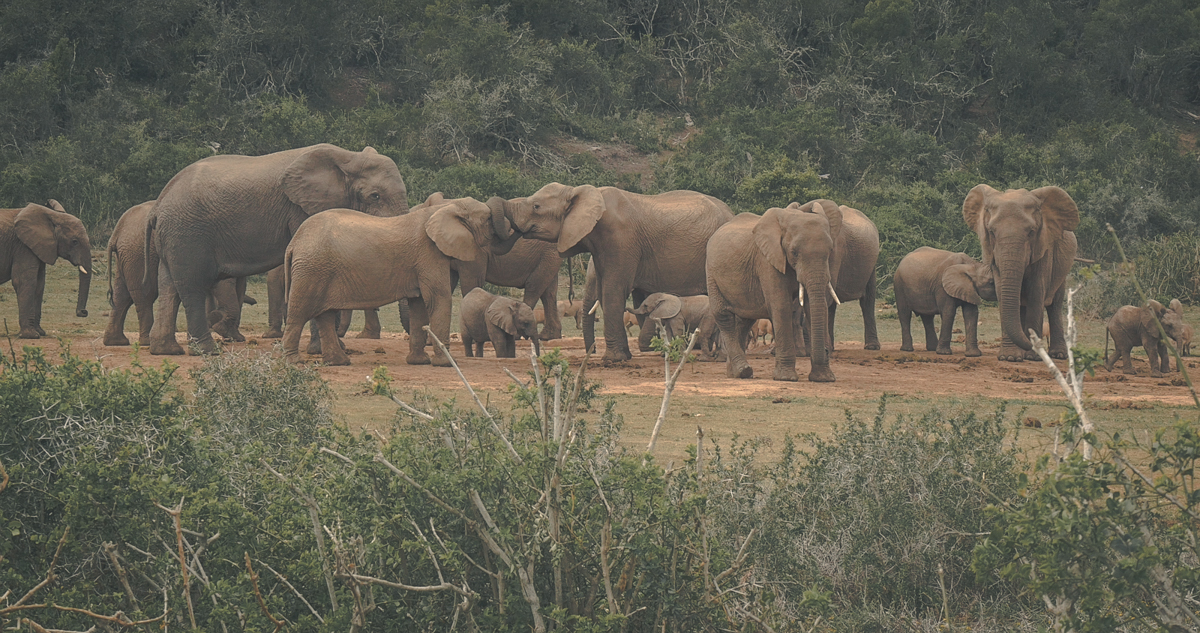 Addo Elephant National Park | South Africa
